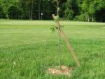 paliki podpirające drzewko